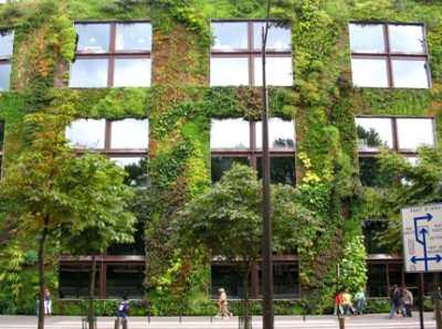 Вертикальное озеленение стен – взгляд на ландшафт под новым углом